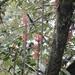 Columnea arguta - Photo (c) Howard Laidlaw, algunos derechos reservados (CC BY-NC)