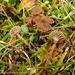 Hodophilus foetens - Photo (c) Elisabeth Mettler, μερικά δικαιώματα διατηρούνται (CC BY-NC)