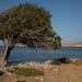 Encina Mediterránea - Photo (c) oggioniale, algunos derechos reservados (CC BY-SA)