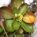 Euphorbia quartziticola - Photo (c) tiana123, osa oikeuksista pidätetään (CC BY-NC), uploaded by Tiana Randriamboavonjy