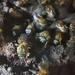 Melipona costaricensis - Photo (c) ricardo_b, algunos derechos reservados (CC BY-NC)
