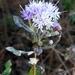 Vernonanthura squamulosa - Photo (c) josebv,  זכויות יוצרים חלקיות (CC BY-NC)