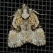 Oligia modica - Photo (c) Raymond Little, μερικά δικαιώματα διατηρούνται (CC BY-NC)