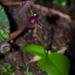 Liparis brunnea - Photo (c) 曾云保, algunos derechos reservados (CC BY-NC)