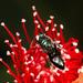 Palaeorhiza reginarum - Photo (c) Norm Farmer,  זכויות יוצרים חלקיות (CC BY-NC)