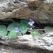 Violeta Africana - Photo (c) Joachim Louis, algunos derechos reservados (CC BY-NC-ND)