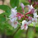 Rhododendron periclymenoides - Photo (c) Christine (and John) Fournier,  זכויות יוצרים חלקיות (CC BY-NC)