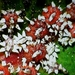 Escamas - Photo (c) Benjamin J. Dion, algunos derechos reservados (CC BY-NC-SA)