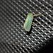 Thespea jade - Photo (c) sunnetchan,  זכויות יוצרים חלקיות (CC BY-NC-SA)