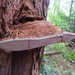 Hongo del Artista - Photo (c) kathawk, algunos derechos reservados (CC BY-NC)