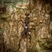Mesamotura - Photo (c) Nicholas John Fisher,  זכויות יוצרים חלקיות (CC BY-NC)