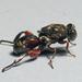 Avispitas Parasitoides de Cobre - Photo (c) Bill & Mark Bell, algunos derechos reservados (CC BY-NC-SA)