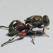 Chalcidid Wasps - Photo (c) Bill & Mark Bell, some rights reserved (CC BY-NC-SA)