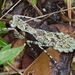Grizzled Mantis - Photo (c) Richard  Crook, some rights reserved (CC BY-NC-SA)