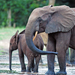 African Elephants - Photo (c) GRID Arendal, some rights reserved (CC BY-NC-SA)