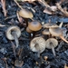 Tephrocybe anthracophila - Photo (c) Christian Schwarz, some rights reserved (CC BY-NC)