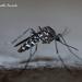 Aedes albopictus - Photo (c) Marcello Consolo, osa oikeuksista pidätetään (CC BY-NC-SA)