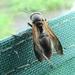 Polybia rejecta - Photo (c) Nelson Wisnik, algunos derechos reservados (CC BY-NC)