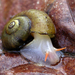 Gastropods - Photo (c) John Slapcinsky, some rights reserved (CC BY-NC)