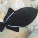 Black-finned Triggerfish - Photo (c) Nikolai Vladimirov, some rights reserved (CC BY-NC)