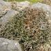 Porcupine Shrub - Photo (c) Jon Sullivan, some rights reserved (CC BY-NC)