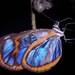 Oleria antaxis - Photo (c) Rich Hoyer, algunos derechos reservados (CC BY-NC-SA)
