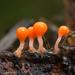 Trichia decipiens - Photo (c) Alexander Shirokikh, μερικά δικαιώματα διατηρούνται (CC BY-NC)