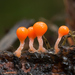 Trichia decipiens - Photo (c) Alexander Shirokikh,  זכויות יוצרים חלקיות (CC BY-NC)