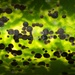 Armored Scale Insects - Photo (c) Jon Sullivan, some rights reserved (CC BY)