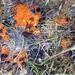Byssonectria terrestris - Photo (c) Juha Kinnunen, algunos derechos reservados (CC BY-NC)
