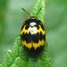 Iphiclus delineatus - Photo (c) Bioexploradores Farallones, algunos derechos reservados (CC BY-NC)