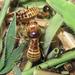 Hodotermes mossambicus - Photo (c) David Bygott, μερικά δικαιώματα διατηρούνται (CC BY-NC-SA)