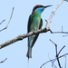 Blue-throated Bee-Eater - Photo (c) Tan Kok Hui, some rights reserved (CC BY-NC)