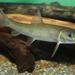 Catostomus commersonii - Photo (c) Brian Gratwicke, algunos derechos reservados (CC BY)