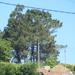 Pinus pinaster - Photo (c) David Claro, μερικά δικαιώματα διατηρούνται (CC BY-NC)
