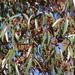 Eucalyptus cladocalyx - Photo (c) Tony Rebelo, μερικά δικαιώματα διατηρούνται (CC BY-SA)