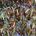 Eucalyptus cladocalyx - Photo (c) Tony Rebelo, algunos derechos reservados (CC BY-SA)