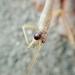 Orthoderella - Photo (c) jbar82, algunos derechos reservados (CC BY-NC-SA)