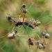 Stegodyphus dumicola - Photo (c) Wynand Uys, μερικά δικαιώματα διατηρούνται (CC BY)