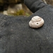 Cooper's Rocky Mountain Snail - Photo (c) Colin Schindler, some rights reserved (CC BY-NC)