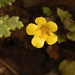 Purple-stemmed Monkeyflower - Photo (c) birdgal5, some rights reserved (CC BY-NC-ND)