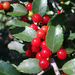 Ilex vomitoria - Photo (c) Laura Clark,  זכויות יוצרים חלקיות (CC BY)
