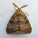 Mariposa-Cigana - Photo (c) richardjaybee, alguns direitos reservados (CC BY-NC)