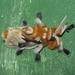Polillas de Franela - Photo (c) Chuck Sexton, algunos derechos reservados (CC BY-NC)