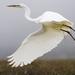Ardeidae - Photo (c) Mike Baird, μερικά δικαιώματα διατηρούνται (CC BY)