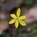 Sisyrinchium pringlei - Photo (c) Heriberto Avila G., algunos derechos reservados (CC BY-NC)