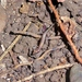 Panaspis africana - Photo (c) thibaudaronson, algunos derechos reservados (CC BY-SA)