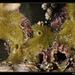 Halichondriidae - Photo (c) Christophe Quintin, algunos derechos reservados (CC BY-NC)
