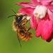 דבורים - Photo (c) nutmeg66,  זכויות יוצרים חלקיות (CC BY-NC-ND)