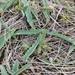 Euphorbia tuberosa - Photo (c) Donovan Kirkwood, algunos derechos reservados (CC BY-NC)